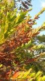 Folhas do verão Fotografia de Stock Royalty Free