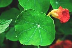 Folhas do verde fotos de stock