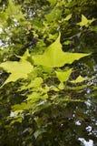 folhas do verde imagem de stock