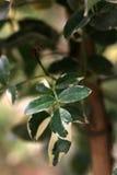 folhas do verde imagem de stock royalty free