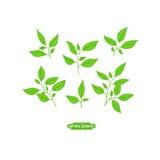 folhas do verde ilustração royalty free