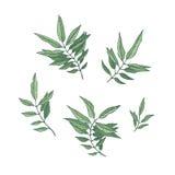 folhas do verde ilustração do vetor