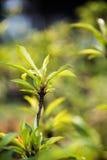 Folhas do verde após a chuva Fotos de Stock Royalty Free