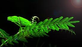 Folhas do verde com alargamentos Fotografia de Stock