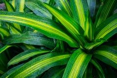 Folhas do verde com gotas Imagem de Stock Royalty Free