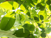 Folhas do verde com luz do sol Foto de Stock