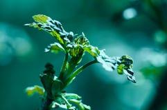 Folhas do verde com luz do sol Fotos de Stock