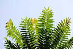 Folhas do verde contra o céu Imagens de Stock