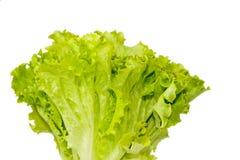 Folhas do verde da salada Fotos de Stock