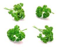 Folhas do verde da salsa Foto de Stock