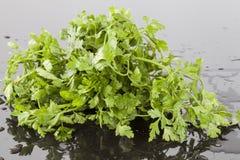 Folhas do verde da salsa em uma superfície reflexiva Fotografia de Stock Royalty Free