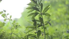 Folhas do verde da vegetação de floresta pequena vídeos de arquivo