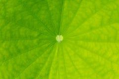 Folhas do verde das árvores com um bonsai bonito Fotos de Stock