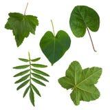 Folhas do verde das árvores e dos arbustos Imagens de Stock