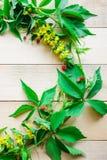 Folhas do verde das uvas Foto de Stock Royalty Free
