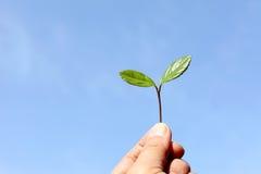 Folhas do verde de encontro ao céu azul Fotografia de Stock