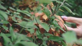 Folhas do verde de encontro ao c?u azul vídeos de arquivo