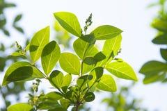 Folhas do verde de encontro ao c?u azul imagem de stock royalty free