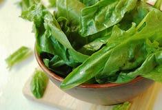 Folhas do verde de espinafres frescos Fotos de Stock
