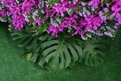 Folhas do verde de Monstera e plantas da folha da samambaia com viole cor-de-rosa fotografia de stock