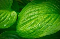 Folhas do verde de uma flor na selva Foto de Stock Royalty Free