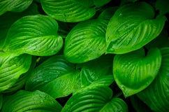 Folhas do verde de uma flor na selva Fotos de Stock Royalty Free