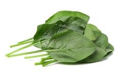 Folhas do verde do espinafre Imagem de Stock