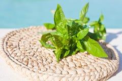 Folhas do verde do fim da manjericão acima Fotos de Stock Royalty Free