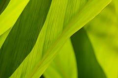 Folhas do verde do fundo Fotos de Stock Royalty Free