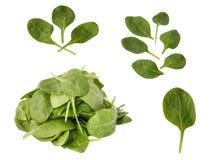 folhas do verde dos espinafres isolados no branco Imagem de Stock