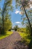 Folhas do verde e céu azul Foto de Stock Royalty Free