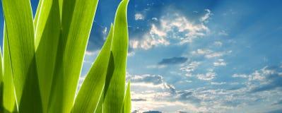 Folhas do verde e o céu fotos de stock