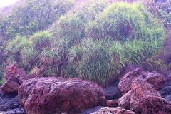 Folhas do verde e rochas de Brown Fotos de Stock