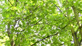 Folhas do verde em filiais vídeos de arquivo