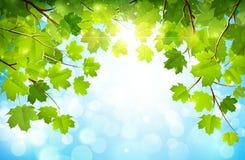 Folhas do verde em ramos Fotos de Stock Royalty Free
