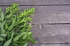 Folhas do verde em um fundo de madeira foto de stock