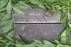Folhas do verde em um fundo de madeira fotografia de stock