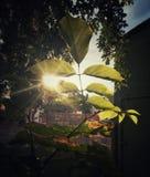 Folhas do verde em um jardim Imagem de Stock Royalty Free