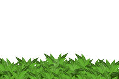 Folhas do verde isoladas no fundo branco Imagem de Stock