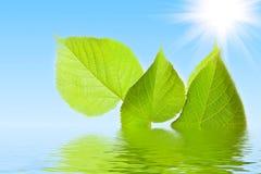 Folhas do verde na água Fotografia de Stock Royalty Free