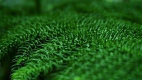 Folhas do verde na floresta tropical filme