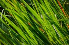 Folhas do verde na luz solar da manhã Fotos de Stock Royalty Free