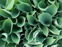 folhas do verde na parte superior Foto de Stock Royalty Free