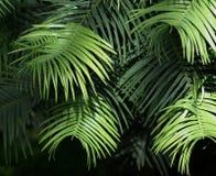 Folhas do verde nas camadas