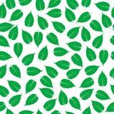 Folhas do verde no fundo branco ilustração do vetor