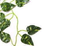 Folhas do verde no fundo branco Conceito tropical Foto de Stock Royalty Free