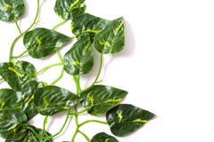 Folhas do verde no fundo branco Conceito tropical Imagem de Stock Royalty Free