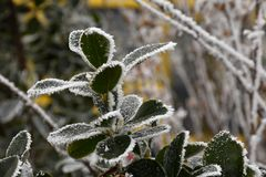 Folhas do verde no inverno Imagens de Stock