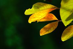 Folhas do verde no jardim natural Fotografia de Stock Royalty Free