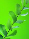 Folhas do verde no verde fotografia de stock royalty free